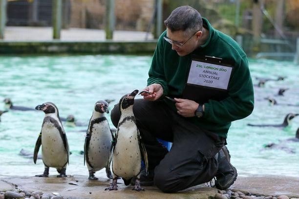 Pingviineillä oli kiire laskentaan.