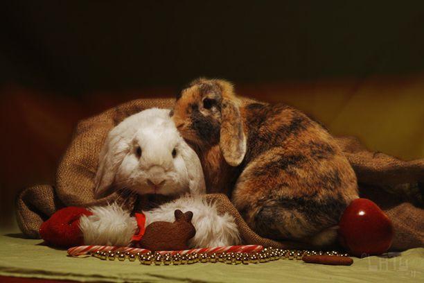 10. Kanien joulu.