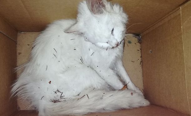 Suomen Eläinsuojeluyhdistysten liitto SEY:n mukaan kissat kärsivät arvostuksen puutteesta.