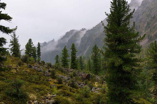 Heinäkuinen sade nostaa sumua vuorille Siperian Burjatiassa.