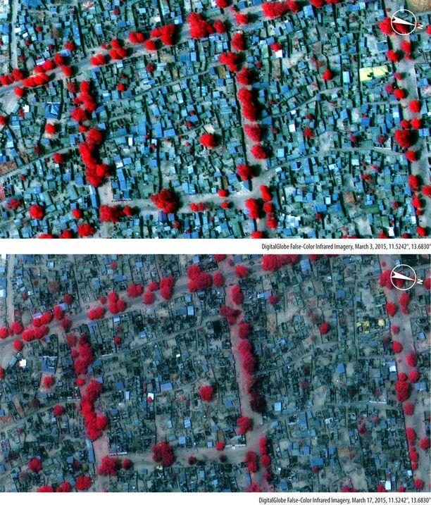 Amnestyn julkaisemat satelliittikuvat havainnollistavat Boko Haramin kylvämää tuhoa. Kuvissa punainen väri viittaa hyvinvoivaan kasvillisuuteen, tummemmat värit taas kuvaavat palaneita alueita. Kaikkien kuvaparien ensimmäiset kuvat on otettu maaliskuun 3. päivänä, jälkimmäiset taas maaliskuun 17. päivänä.