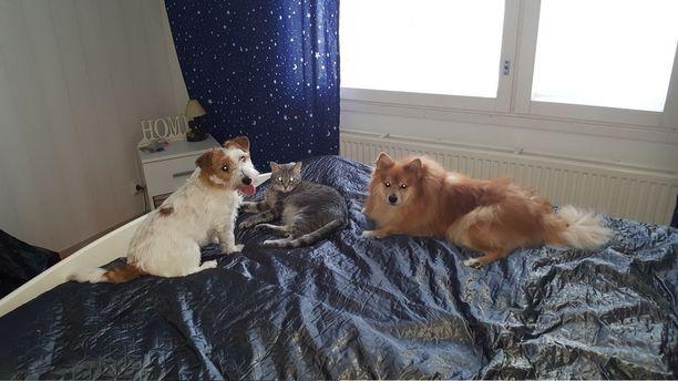 Aluksi kissa isotteli viimeisenä perheeseen tulleelle ruskealle koiralle, mutta nyt yhteiselo sujuu leikkien ja yhdessä nukkuen.