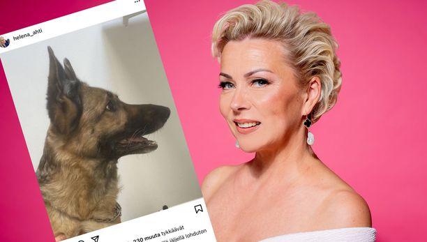 Helena Ahti-Hallbergin koira on kuollut.
