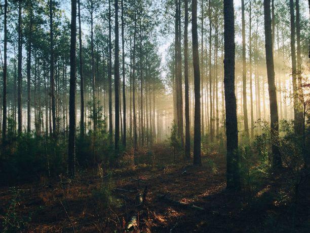Suomen metsissä kannattaa kulkea nauttimassa luonnosta ja puhtaasta ilmasta.