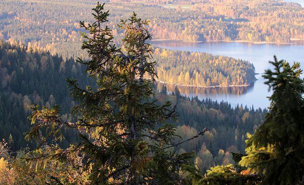 Eduskuntapuolueet aikovat kasvattaa Suomen hiilinieluja pitkäjänteisesti muun muassa lisäämällä metsien kasvua.