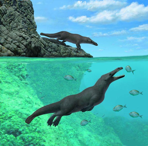 Nelijalkainen valas pystyi liikkumaan vedessä ja maalla.