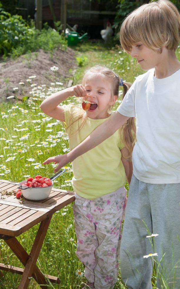 Mansikat voivat suurina määrinä aiheuttaa etenkin pikkulapsille ripulia.