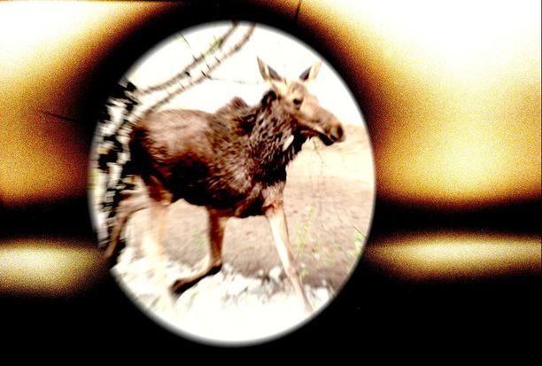 Hovioikeus määräsi poronhoitajan kiväärin kiikaritähtäimineen menetetyksi valtiolle rikoksentekovälineen. Kuvan ase ei liity tapaukseen.