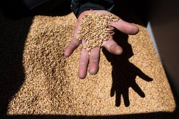 Venäjä on tukenut omaa tuotantoaan paikatakseen elintarvikkeiden tuontikiellon tuomaa vajetta.