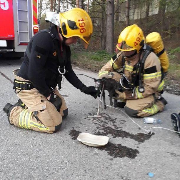 Kaksi palomiestä antaa lisähappea palavasta asunnosta pelastetulle kissalle.