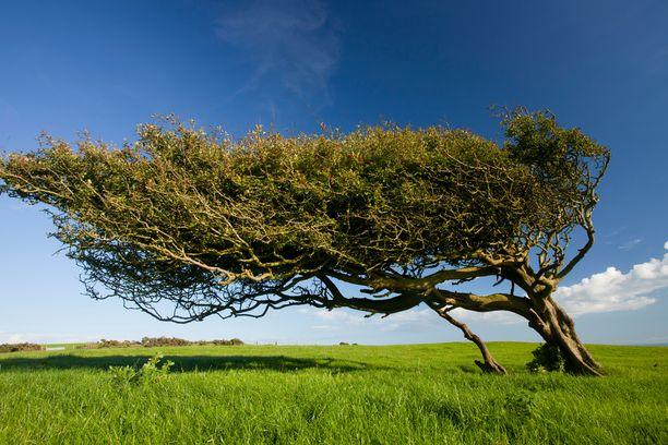 Tuulten voimakkuus vaikuttaa luonnossa muun muassa veden haihtumiseen ja pölytykseen.