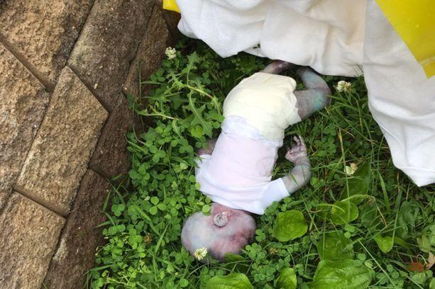 """""""Kuollut"""" vauva löytyi aidan vierestä puiston reunamilta Queensissä."""