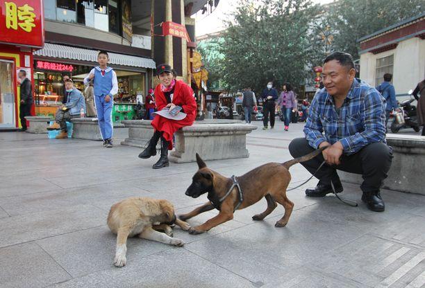 Koko Kiinassa elää ainakin sata miljoonaa koiraa. Kuvituskuva Tiibetin autonomiselta alueelta.