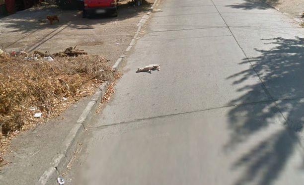 Kun auto on ohittanut paikan, koira makaa tien reunassa.