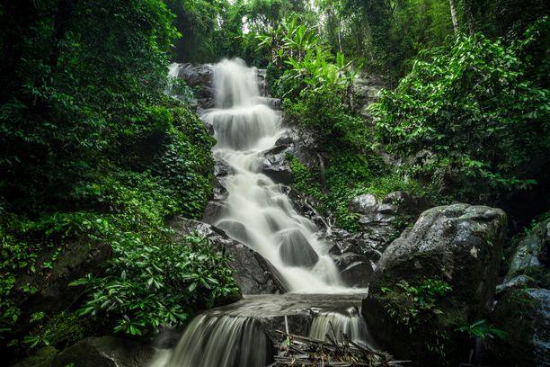Thaimaan rehevä luonto tarvitsee vettä. Suurin osa sateista saadaan sadekauden aikaan.