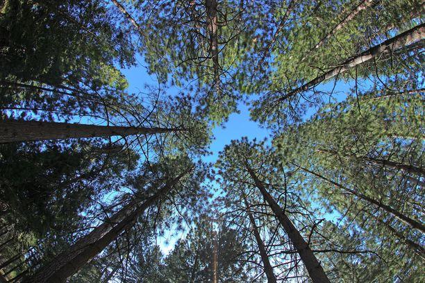 Metsä on monelle suomalaiselle tärkeä hiljaisuuden paikka.