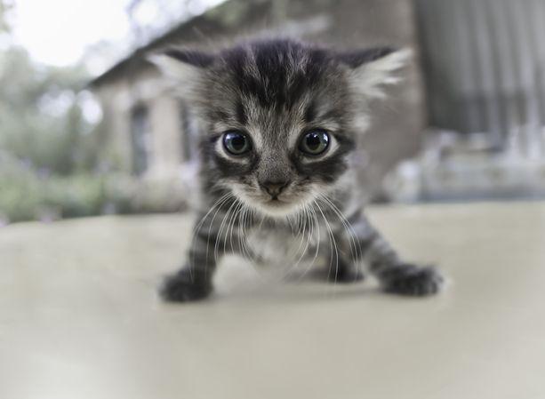 Hylätyt kissat ovat ongelma erityisesti maaseudulla. Kuvituskuva.