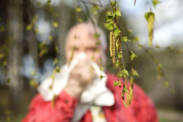 Jos on allerginen esimerkiksi siitepölylle, voi olla allerginen myös joillekin juureksille, hedelmille ja mausteille.