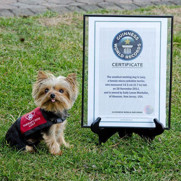 Koira on saanut myös virallisen todistuksen maailman pienimpänä terapiakoirana toimimisesta.