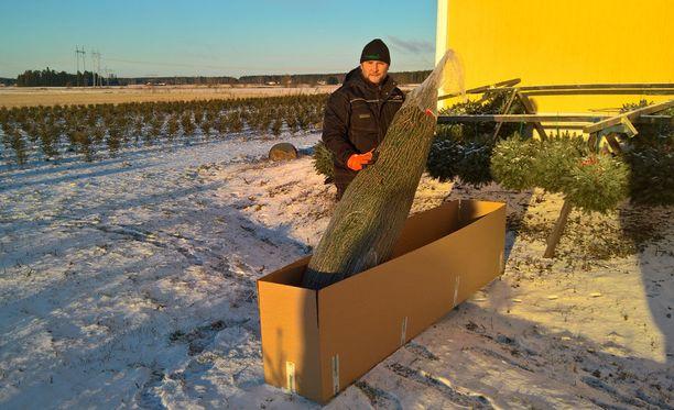 Joulukuuset pakataan pahvilaatikoihin ja toimitetaan postin terminaaliin asiakkaille lähetettäviksi.