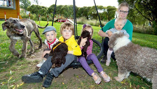 Haatajan perheen koirarotuja pidetään usein allergisillekin sopivina, sillä espanjanvesikoirien kikkara turkki on sellainen, että siitä ei irtoa karvaa.