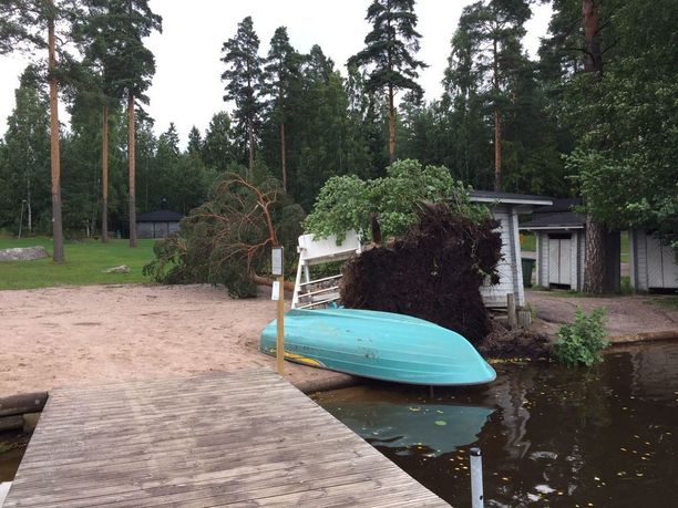 Myrsky raastoi männyn kumoon ja säikäytti uimarit pahanpäiväisesti.