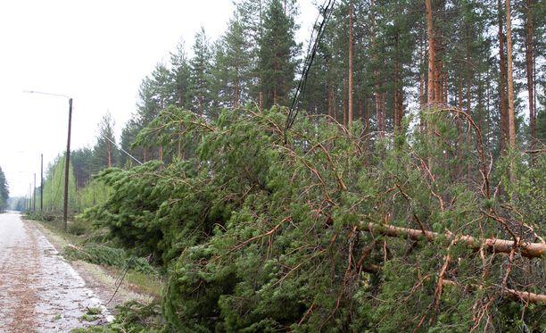 Tänään kannattaa varoa tielle kaatuvia puita.