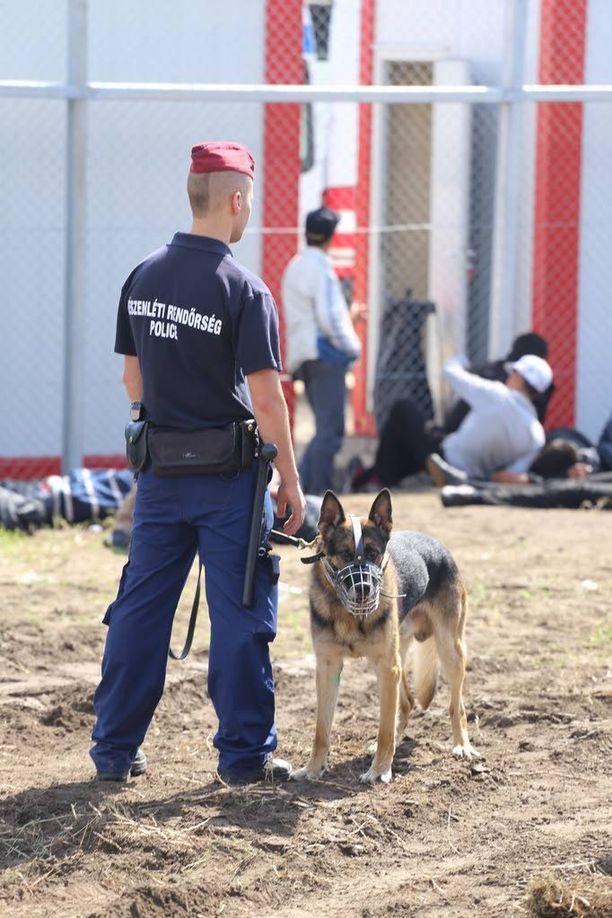 Pakolaisleirin ulkopuolella oli ainakin neljä poliisikoiraa vartioimassa aluetta.