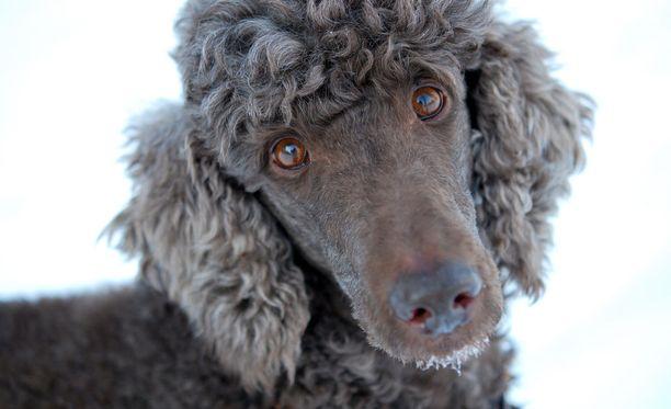 Kuvituskuva. Kuvan koira ei liity tapaukseen.