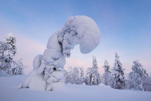 Keski- ja Pohjois-Lapissa lumitilanne on ainakin hiihtoharrastuksen näkökulmasta erinomainen.