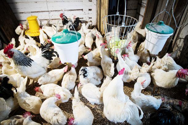 Nykyisellään lihantuotanto vastaa jopa 80 prosenttia antibioottien vuosittaisesta kulutuksesta maailmassa.