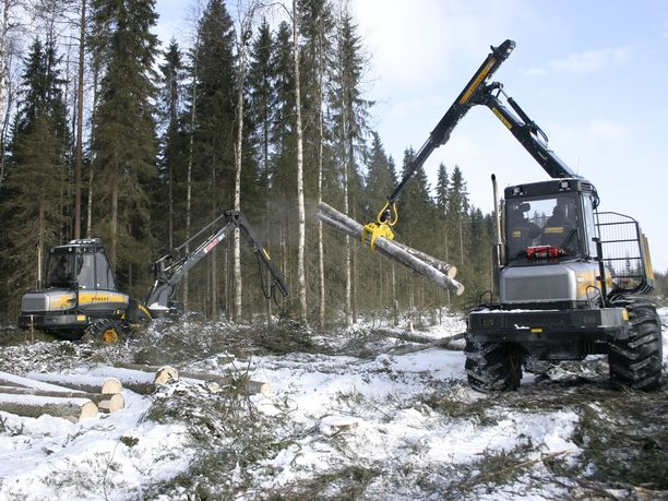Vihreät haluaa rajoittaa metsien hakkuumääriä.