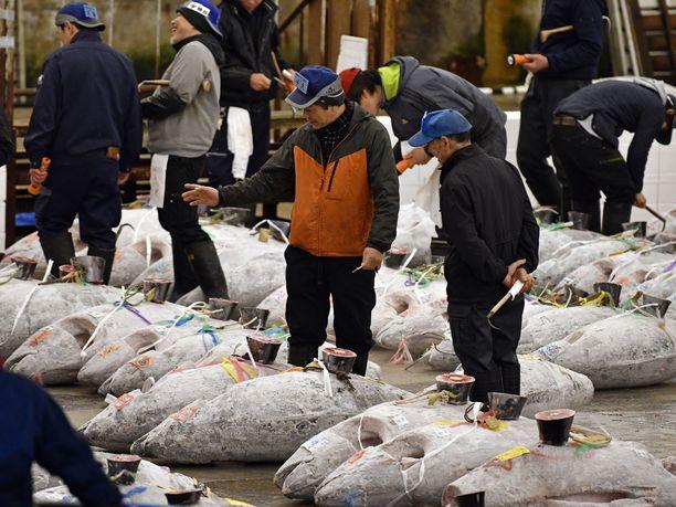 Tonnikalakauppaa käydään Tsukijissa viimeisin kerran lauantaina.