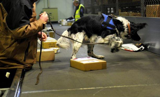 Tullikoira tutki postilähetyksiä vuonna 2011.