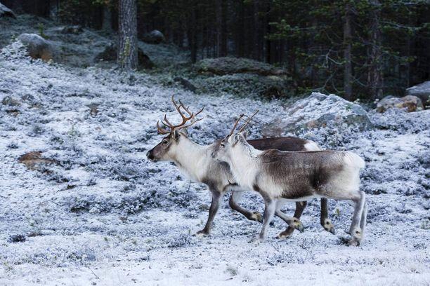 Suomalaisporot saavat uuden sovelluksen turvakseen. Kuvituskuva.