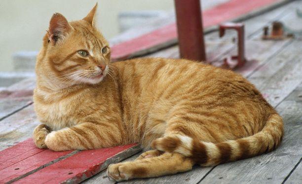 Kahden lapsen äiti kaipasi naapurustolta lainaan oranssia kissaa.