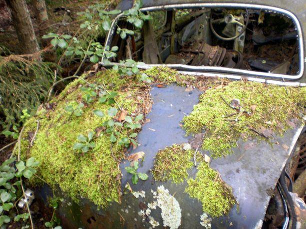 Osa autojen hautausmaan romuista on saanut sammalpeitteen.