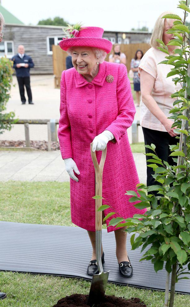 Kuningatar Elisabeth on vieraillut kesällä esimerkiksi Cambridgen kasvitieteellisessä instituutiossa, jossa hän pääsi myös istutuspuuhiin.