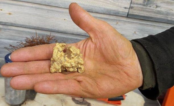 Tuoreimman jättihipun löysi Mika Telilä Puskuojalta, Kari ja Sirkka Merenluodon kaivospiiriltä tiistaina 12.6.2018. Komea 225-grammainen löytyi koneellisesti peräti neljän metrin syvyydestä - isän ohjeistuksella.