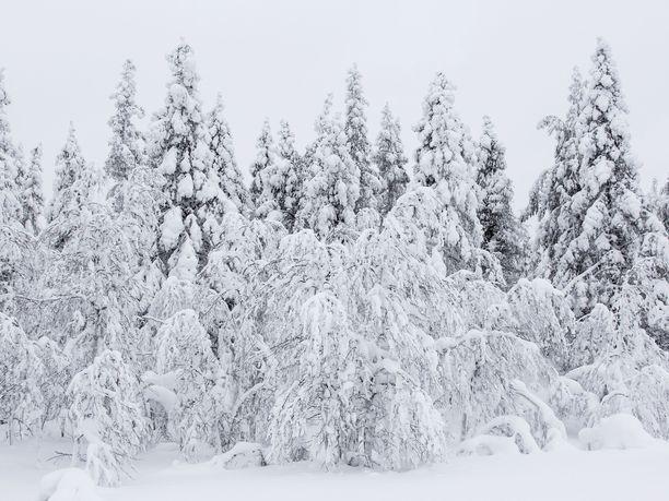 Lapin Sodankylässä rikottiin maanantaiaamuna lumiennätys. Kuvan lumi ei tiettävästi liity tapaukseen.