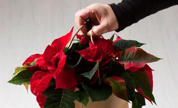 Moni antaa ja saa joulutähden tervehdyksenä läheiseltä.