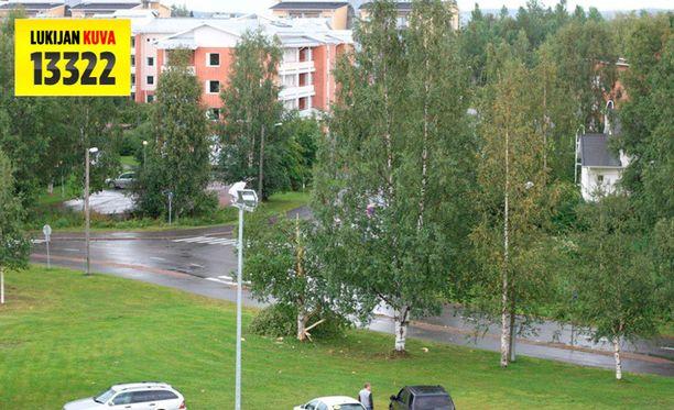 Salama katkaisi korkean koivun Rovaniemen ammattikorkeakoulun pihassa.