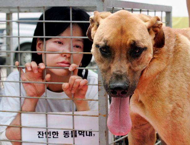Eteläkorealainen eläinaktivisti protestoi koiranlihatuotantoa vastaan Seongnamissa. Arkistokuva.