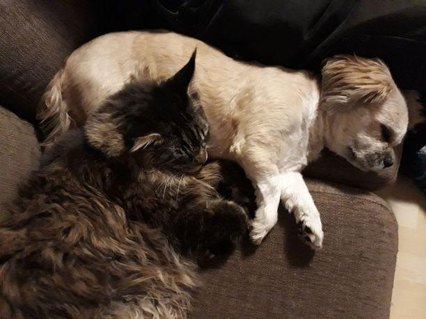 Roosa-koira ja perheen kissat ovat hitsautuneet yhdeksi laumaksi. Välillä riekutaan, välillä nukutaan yhdessä.