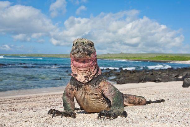 Galapagossaarten luonto ei tahdo kestää suuria matkailijamääriä.