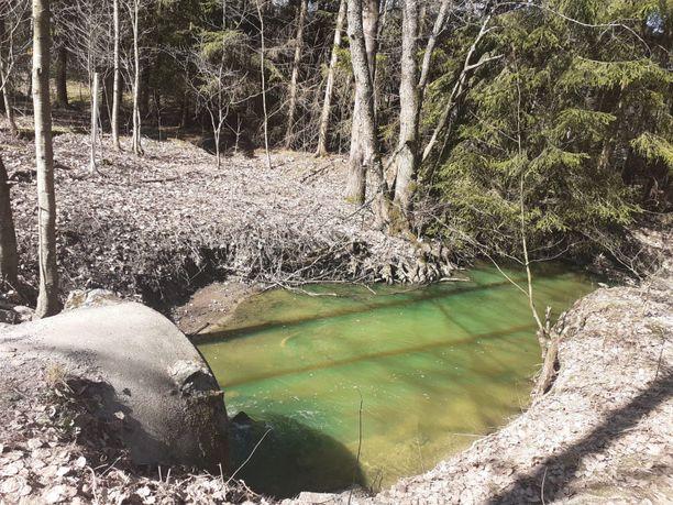 Maunulanpuron vesi värjäytyi vihreäksi.