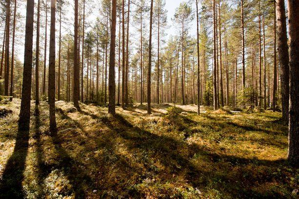 Metsä Fibren kaavailema Kemin biotuotetehdas ja Rauman uusi saha lisäisivät puunkäyttöä yhteensä noin kuusi miljoonaa kuutiota. Lisähakkuiden pelätään uhkaavan luonnon monimuotoisuutta.