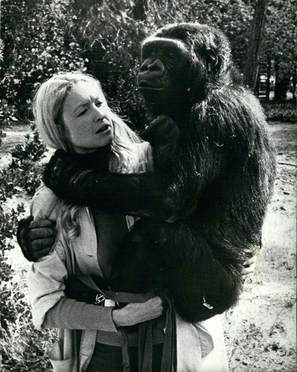 Francine Patterson ja Koko vuonna 1972.