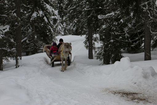 Laineen perhe tuli Heinolasta Rukalle. He ovat omasta mielestään Lapissa silloin kun ympärillä on lunta, luontoa, rauhaa ja poroja.