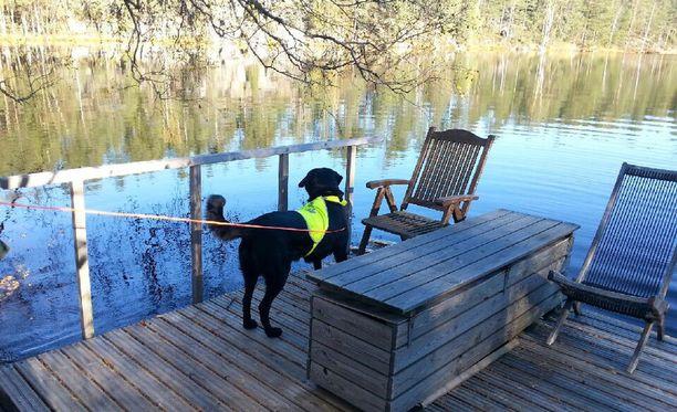 Myös toisen etsintäryhmän koira sai hajun Nelan etsinnöissä - tosin eri lammelta kuin etsintäpartion koolle kutsuneen Jarkko Hyppösen etsintäryhmän koira.